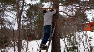 Gert gaat de boom in