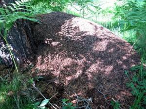 De instand gebrachte mierenhoop