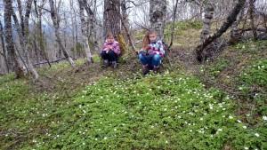 16 hvitveis - bosanemoontjes