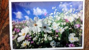 dsc_1161-21-04-2013